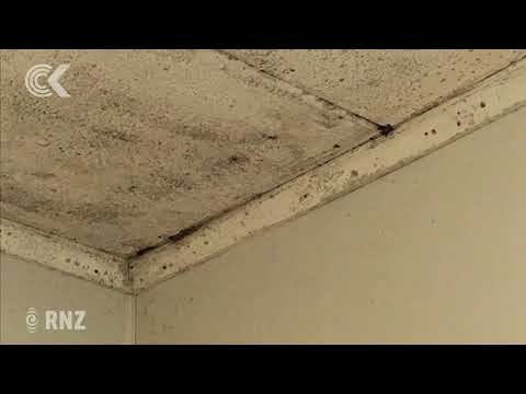 Mould a bigger threat in homes than meth residue - health expert thumbnail