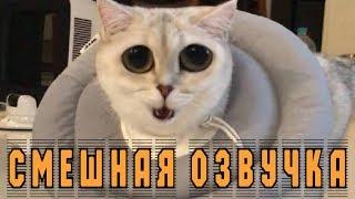 ПРИКОЛЫ С КОТАМИ коты смешное СМЕШНАЯ ОЗВУЧКА!!! Новое видео про котов