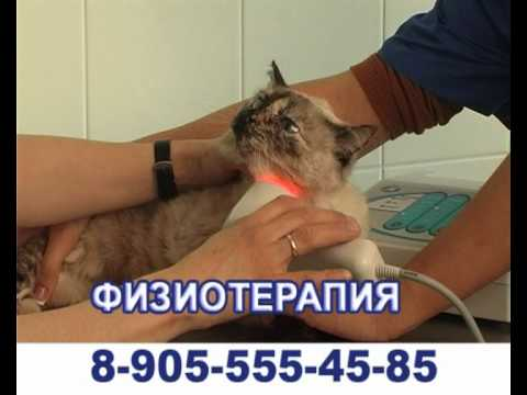 Ветеринарная клиника Быково Малаховка Удельная