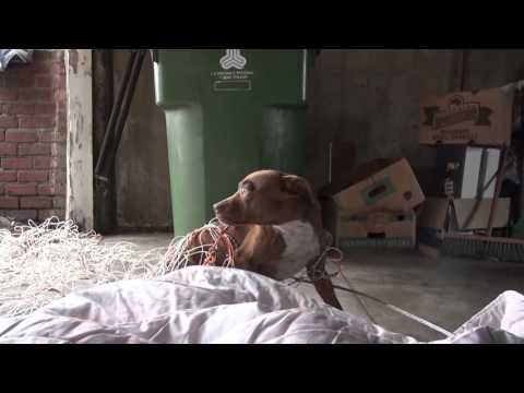 Hope For Paws ( Pit Bull Rescue Like You Have Never Seen Before )