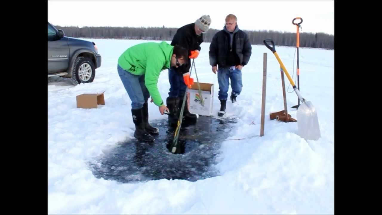 South buck lake alberta net fishing for whitefish january for White mountain fishing report