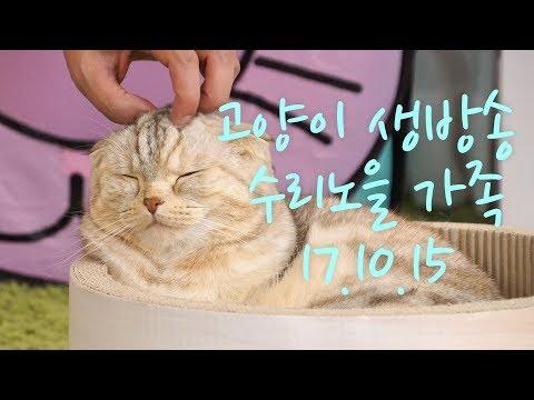 [생방송] 수리노을 고양이가족들 10월15일 【SURI&NOEL】