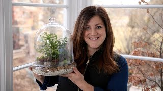Putting Together a Terrarium with Ferns! 🌿💚// Garden Answer