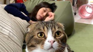 ママが起きない!怒る猫