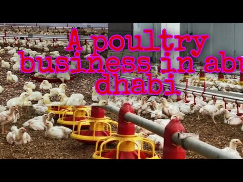 POULTRY BUSINESS IN ABU DHABI FARM/PURE FEDS