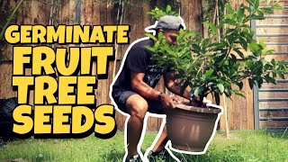 Simple Farm Life [EP 6.5] - SUPER EASY! How To Germinate Fruit Tree Seeds..