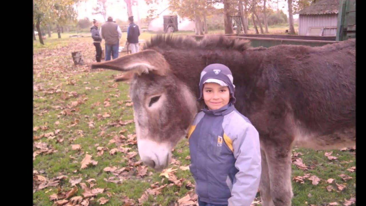 Gyerekek és állatok a tanyán - YouTube 650f28acb9