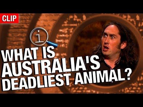 QI | What Is Australia's Deadliest Animal?