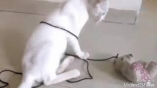 Hilarious funny cat moments