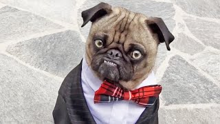 Mean Mug Pug - Business Time