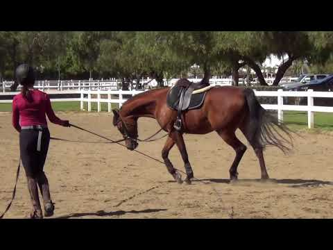 Christina and Victoria:  Starting a young horse