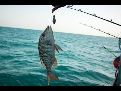 Ultimate Action.. fishing at Doha