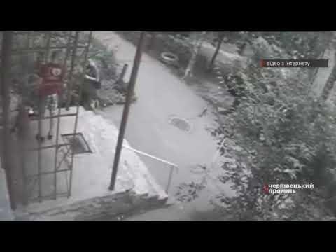 Чернівецький Промінь: Чернівчанин спустив бійцівського собаку на кота