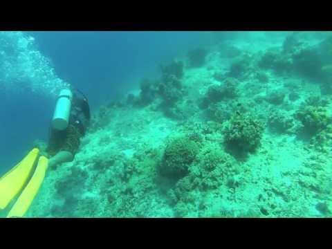 Balicasag Drift Dive Part 2