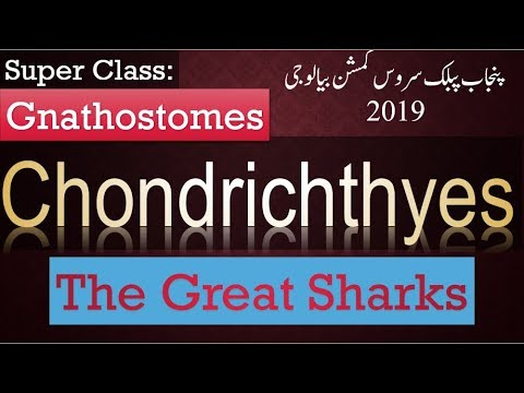 Gnathostomes | Chondrichthyes | Cartilaginous Fishes | Sharks | Features | PPSC Biology
