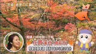 いよいよ本格的な紅葉シーズンを迎え、県内の紅葉スポットも沢山の観光...