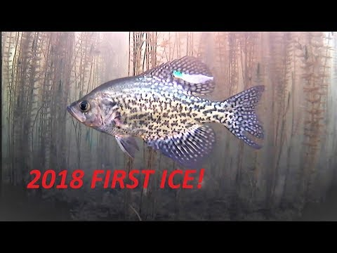 2018 ICE FISHING FIRST ICE Northern Wisconsin!