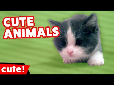 Funniest Pet Clips, Moments, Bloopers & Outtakes Compilation | Kyoot Animals