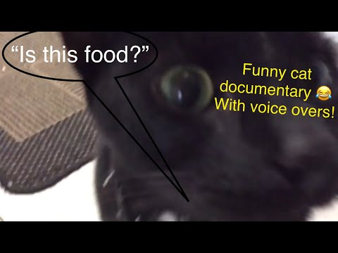 Cat documentary | *With funny voice overs* 😂
