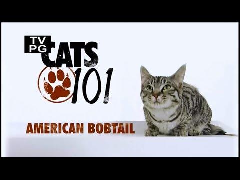 Вопрос: Можно ли скрещивать американского бобтейла с другими породами кошек?