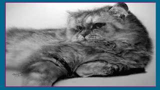 Коты художника Пол Лунга (Artist Paul Lung and his cat)