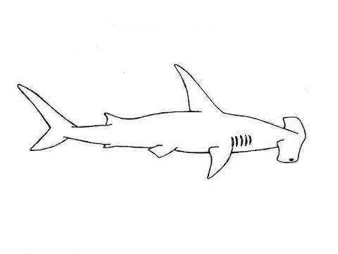 Вопрос: Как нарисовать акулу?