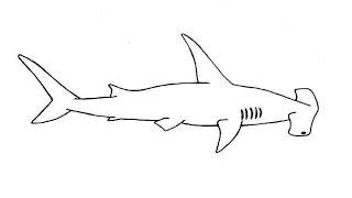 How to Draw a Hammerhead shark  / Как нарисовать Акулу-молот