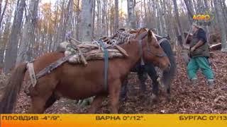 Конете на България: Каракачанските коне, автор Диана Александрова