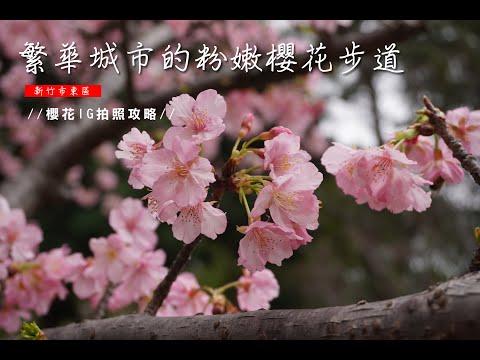 【2021新竹櫻花免費景點】繁華城市的粉嫩櫻花步道。新竹公園的河津櫻花盛開!櫻花最前線台灣版本。櫻花IG拍照攻略。麗池公園