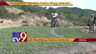 Cannabis mafia rampant in Visakha agency TV9