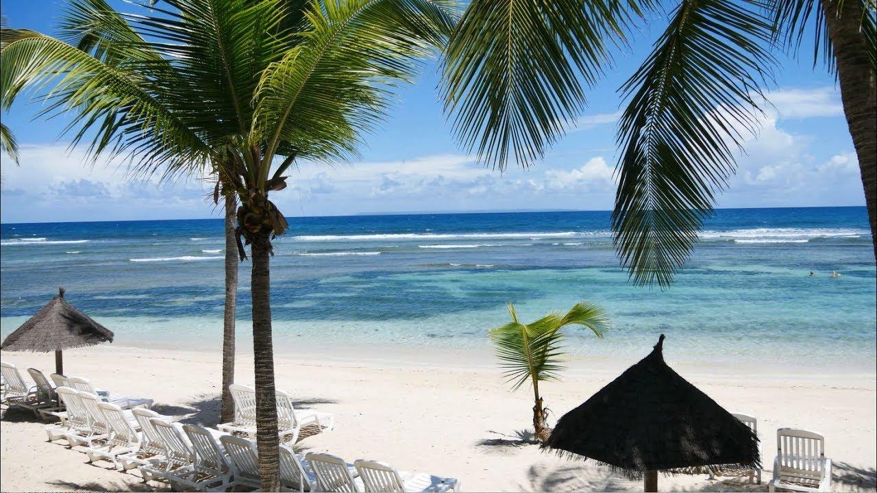 Guadeloupe cocotier saint anne plage gwadloup - Palmier cocotier ...