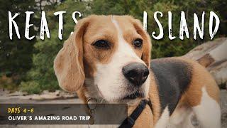 Beagle lindo toma ferry; visita una isla remota en Canadá
