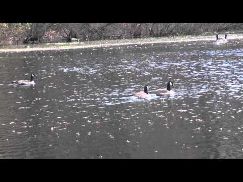 King Fisher Park Lake - Great Kills Staten Island NY