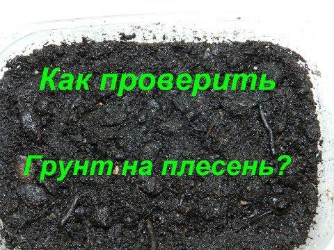 Как проверить грунт на плесень