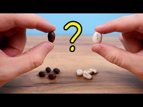 Семена Лотоса и Волшебные бобы с Алиэкспресс! Что из них вырастет? Alex Boyko