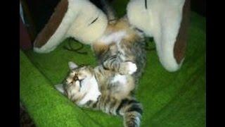Невероятно смешные спящие кошки/Incredibly funny sleeping cat