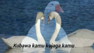 Arwana band-Angsa putih_lirik
