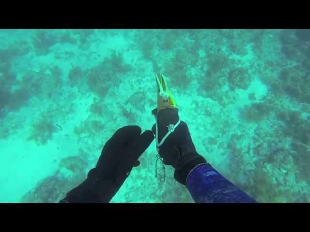 spearfishing florida keys winter 2014