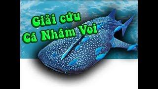 Giải Cứu Cá Nhám Voi - Ngư dân Việt Nam và Malaysia liệu có bắt làm thức ăn??