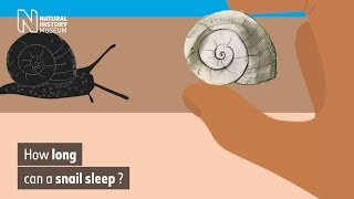 How long can a snail sleep? | Natural History Museum