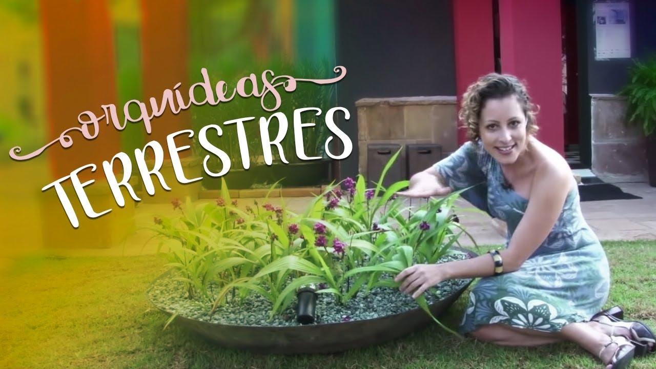 Como cuidar de orqu deas terrestres youtube - Como cuidar las hortensias de exterior ...