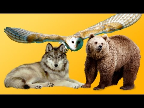 hayvanlarla ilgili oha diyeceğiniz 74 ilginç bilgi
