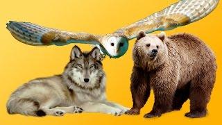 Hayvanlarla İlgili OHA Diyeceğiniz 74 İlginç Bilgi