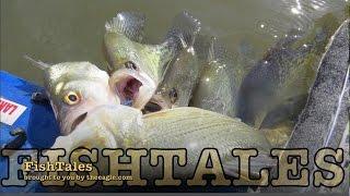 FishTales: Yegua Creek... The Best fishing in years!
