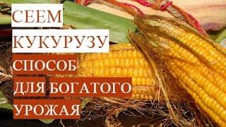 Посадка Кукурузы.  Проверенный Способ для Богатого Урожая.