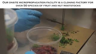 Did You Know? Episode 2 - Plant Tissue Culture Propagation