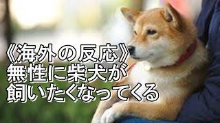 《海外の反応》無性に柴犬が飼いたくなってくる「柴犬の飼い主は勝ち組...