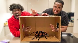 What's In The Box Challenge - Win $10,000 (LIVE ANIMALS)