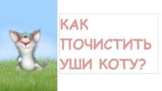 Как почистить уши коту?