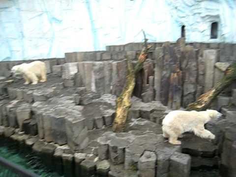 有看過這麼活潑的北極熊嗎